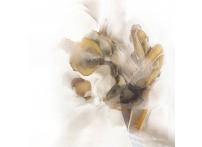 """Холст """"Песня поющего цветка"""" 54STR-AQUARELLE6"""